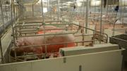 Pig farm pig pens, application range and advantages and disa