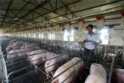 Pig Farm Construction Project Feasibility Study