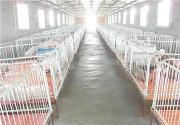 Large-scale pig farms to select intelligent equipment