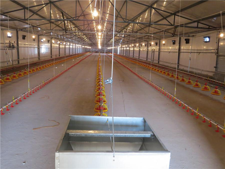 Broiler Rearing Farm Project