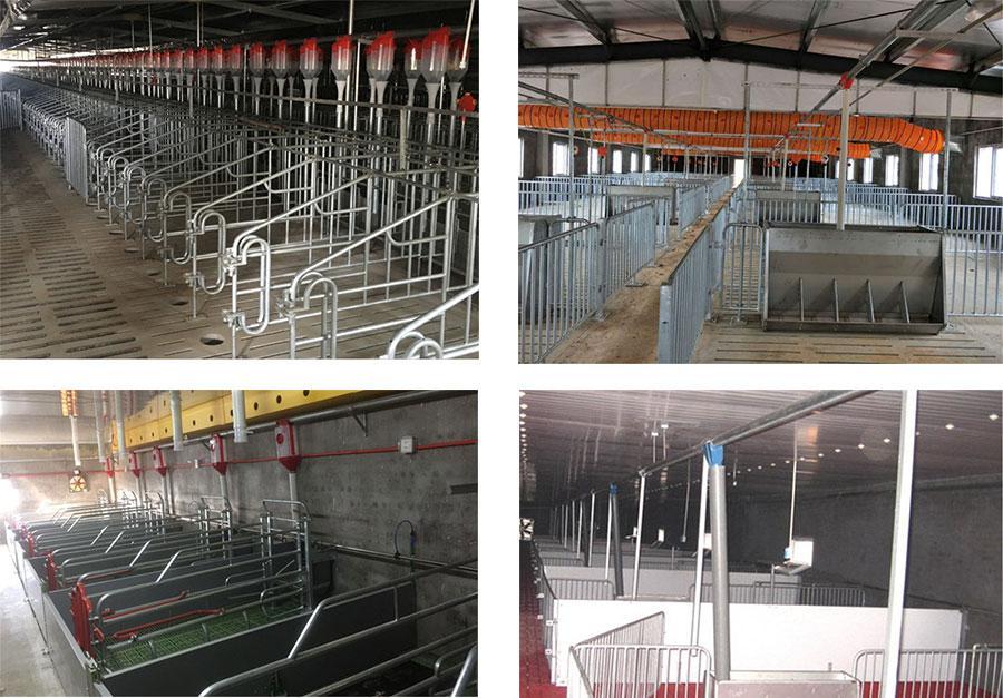 Pig farm integral Design&Equipment