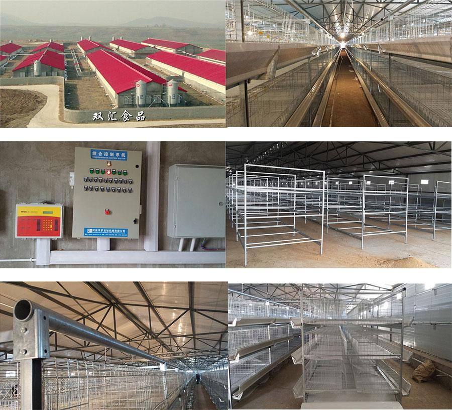 Broiler 4 Tiers Cage Rearing Farm Project