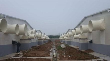 WAN YANG Pig Farm Project