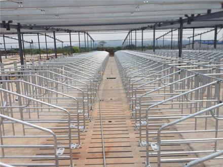 ZhenBang Farm Project 2