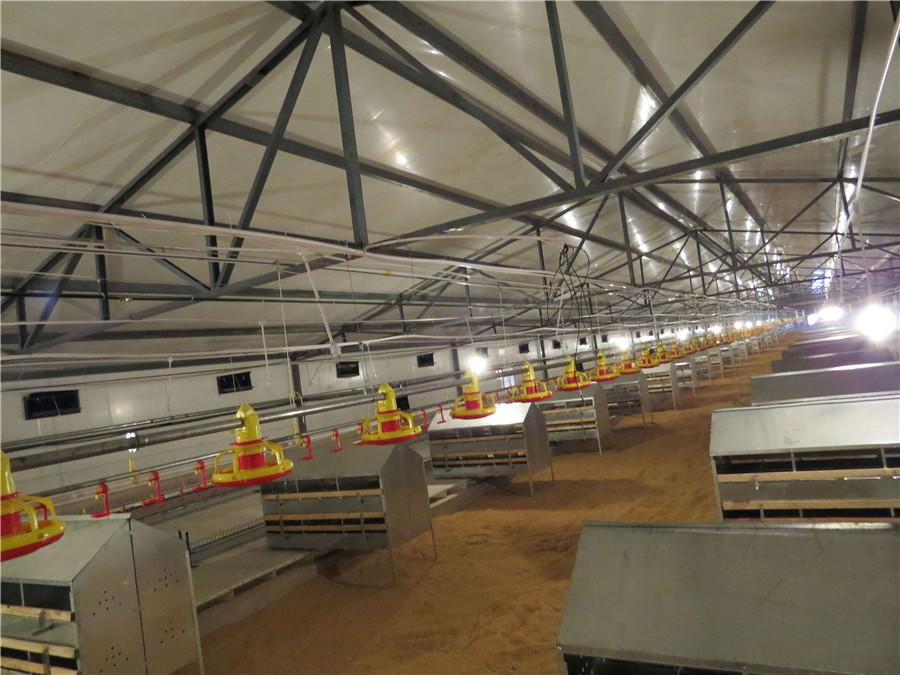 Broiler Rearing Farm Project 3