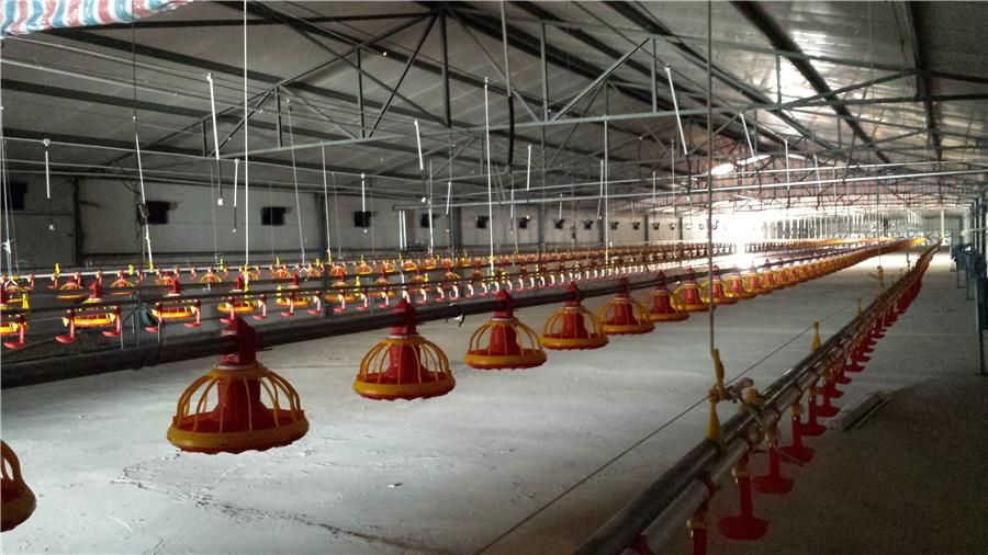 Broiler Rearing Farm Project 4