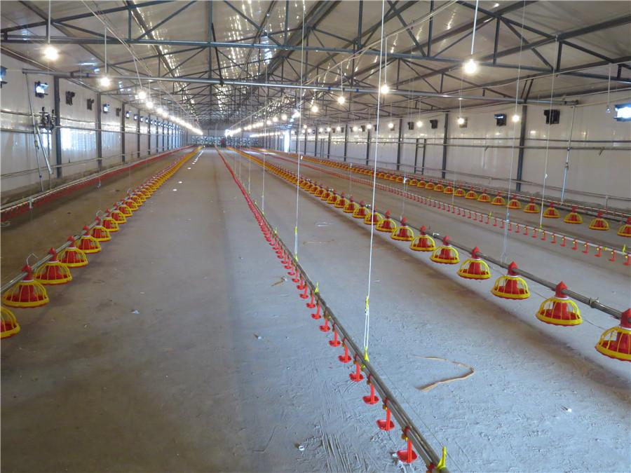 Broiler Rearing Farm Project 5