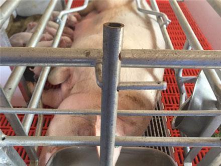 Ten Thousand Pigs Farm Project 6