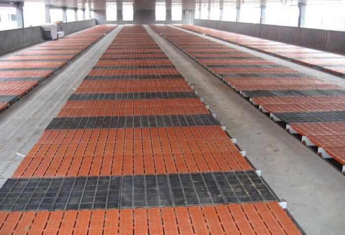 Plastic slat floor for pig