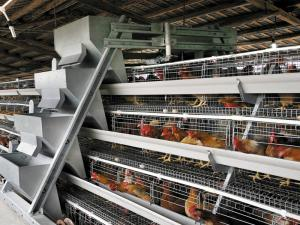A Type Chicken Cage